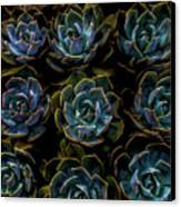 Succulent Canvas Print by Rod Sterling