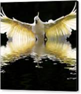 Sulphur Crested Cockatoo Rising Canvas Print