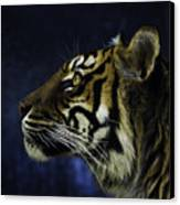 Sumatran Tiger Profile Canvas Print