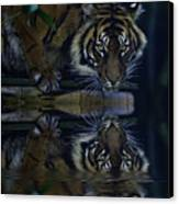 Sumatran Tiger Reflection Canvas Print
