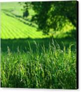 Summer Fields Of Green Canvas Print by Sandra Cunningham