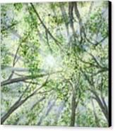 Summer Rays Canvas Print
