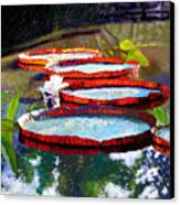 Summer Sunlight On Lily Pads Canvas Print