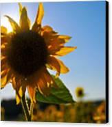 Sun And Sunflower Canvas Print