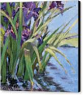 Sun Day - Iris In A Pond Canvas Print