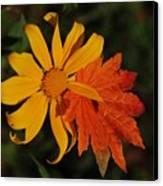 Sun Flower And Leaf Canvas Print