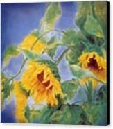 Sun Flowers No.3 Canvas Print