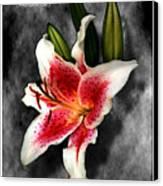 Sun Gazer Lily Poster Canvas Print