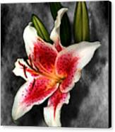 Sun Gazer Lily Canvas Print
