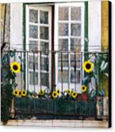 Sunflower Balcony Canvas Print