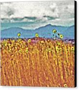 Sunflower Field 1 Canvas Print