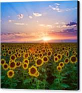 Sunflower Canvas Print by Hansrico Photography
