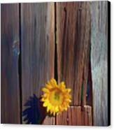 Sunflower In Barn Wood Canvas Print by Garry Gay