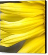 Sunflower Canvas Print by Mary Van de Ven - Printscapes