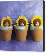 Sunflower Pots Canvas Print by Anne Geddes