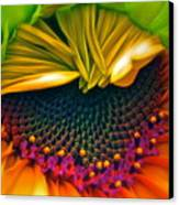 Sunflower Smoothie Canvas Print by Gwyn Newcombe