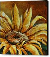 Sunflower Study Canvas Print