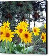 Sunflowers And Pine Cones Canvas Print by Will Borden