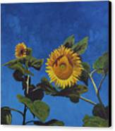 Sunflowers Canvas Print by Marco Busoni