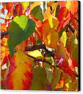 Sunlit Fall Leaves Canvas Print