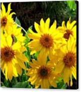 Sunlit Wild Sunflowers Canvas Print