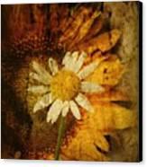 Sunny Antiqued Canvas Print