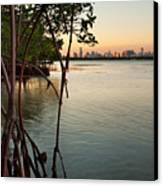 Sunset At Miami Behind Wild Mangrove Forest Canvas Print by Matt Tilghman