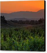 Sunset Over The Vineyard Canvas Print by Peter Tellone