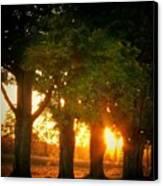 Sunset Trees Canvas Print by Joyce Kimble Smith