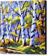 Sunshine And Birches Canvas Print