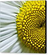 Sunshine Daisy Canvas Print