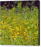Susans In A Green Field Canvas Print