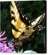 Swallowtail 2 Canvas Print