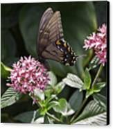 Swallowtail Buterfly Canvas Print