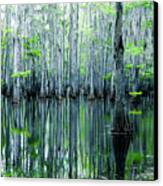 Swamp In Louisiana Canvas Print by Ester  Rogers