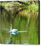Swan On The Cong River Cong Ireland Canvas Print