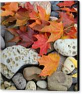 Sweet Autumn 1 Autumn Leaves Rock Designs Photography Digital Art Prints Canvas Print