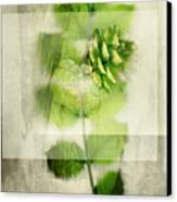 Sweet Rustic Pine Canvas Print