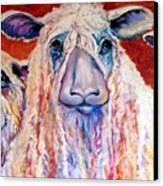 Sweet Wensleydales Sheep By M Baldwin Canvas Print by Marcia Baldwin
