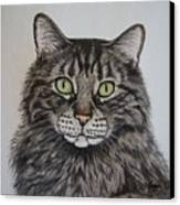 Tabby-lil' Bit Canvas Print by Megan Cohen