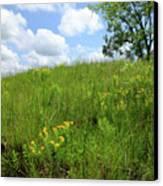 Tall Grass Hillside Canvas Print