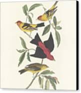 Tanagers Canvas Print by John James Audubon
