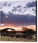 Tarangire Sunset Canvas Print