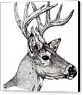 Ten Point Buck Canvas Print