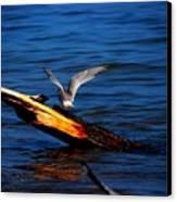 Tern Around Canvas Print