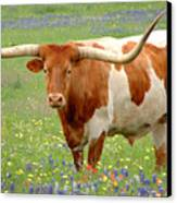 Texas Longhorn Standing In Bluebonnets Canvas Print by Jon Holiday