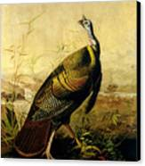 The American Wild Turkey Cock Canvas Print