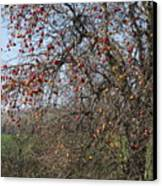 The Apple Tree Canvas Print by Danielle Allard