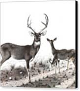 The Backroad Canvas Print by Steve Maynard