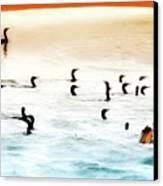 The Birds Santa Rosa Island Canvas Print
